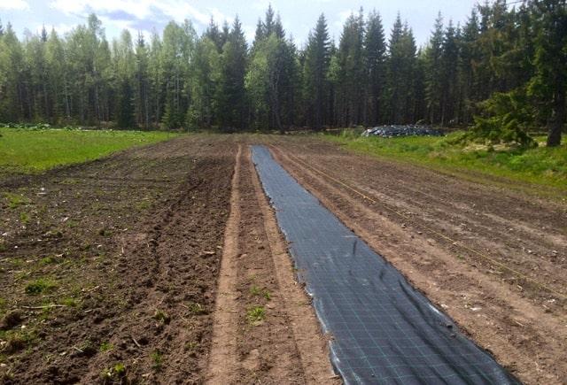 Helt spikrakt blev det inte, men jag är rätt nöjd ändå. När väven ligger på plats så kör jag med trädgårdstraktorn längs med sidorna för att trycka fast jorden.
