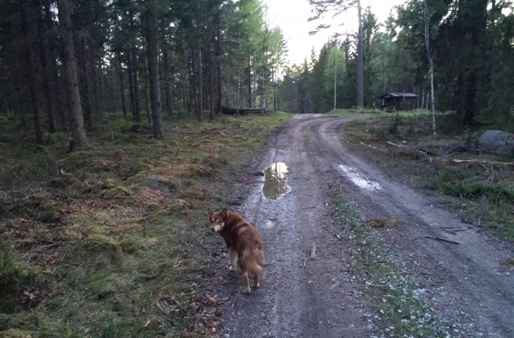 Jag vill bara vara säker på att du också lagt märke till att det finns hjortdjur en bit in i skogen här. Inte för att jag tänkt jaga dem, men jag tänkte att du kanske ville veta.