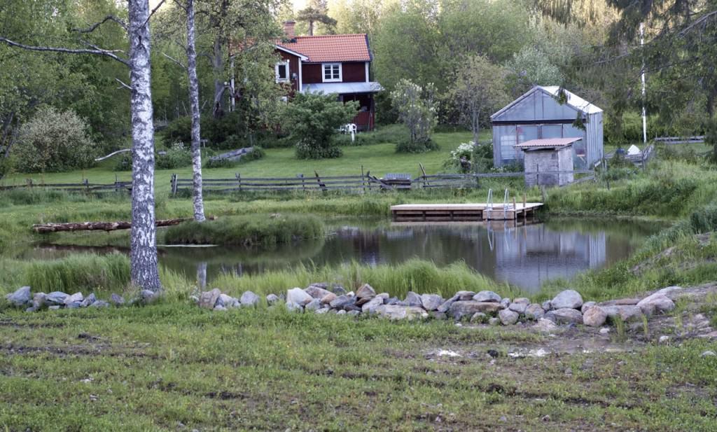 Efter ett och ett halvt år börjar dammen se riktigt fin ut. De problem som återstår är att komma tillrätta med vattenkvalitén, bygga en stabilare bro – och kräftorna förstås.