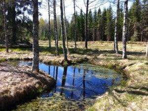 När jag flyttade hit fanns et en liten grund damm som torkade ut på somrarna.