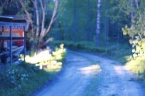 Medan mörkret föll fick jag stammen uppsågad i skenet från bilens helljus.