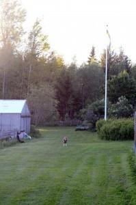 Det finns en tillfredställelse med en välklippt gräsmatta. Eller kanske är det så att när den börjar bli lång är den en ständig påminnelse om ytterligare ett försummat jobb.
