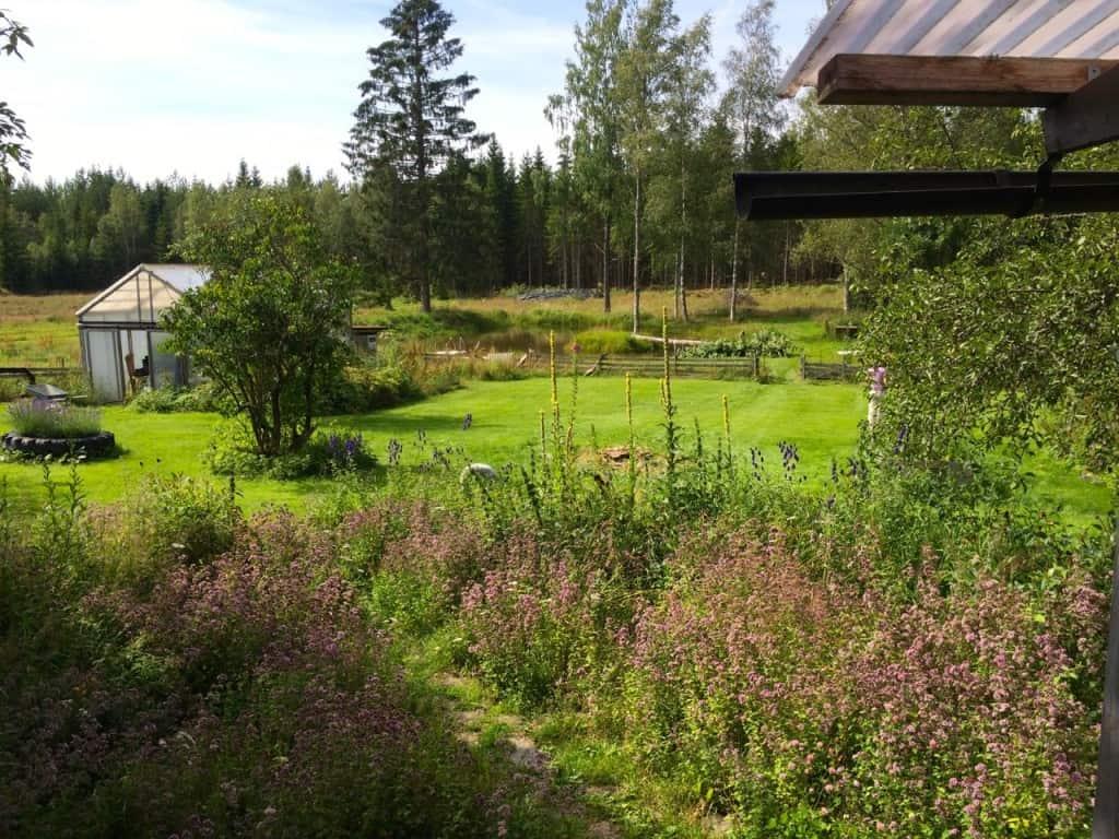 Nu när jag lagt ner så mycket arbete på dammen så är det trevligt att faktiskt kunna se den också.