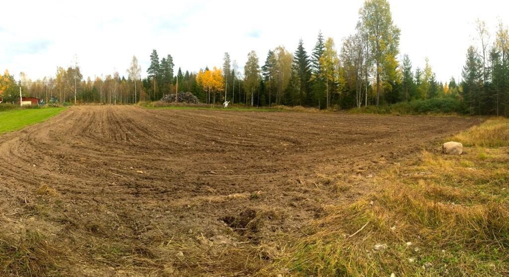 Nu är fältet plöjt och harvat. Planen var att jag skulle hinna så gräs här i år, men det får vänta till våren. Det finns fortfarande en hel del sten att plocka undan. Men efter två år av gröngödsling har praktiskt taget alla kvarvarande granrötter multnat ner.