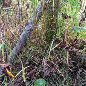 Hade inte hönan använt sig av ingången hade jag aldrig hittat glipan i nätet. Tur att inte räven hittade den först.