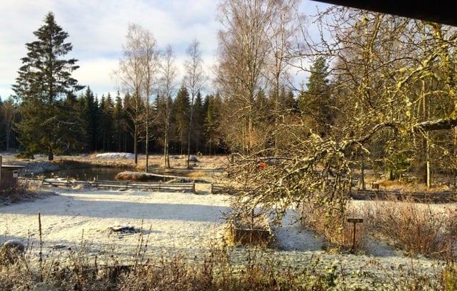 Från slask till snö, igår kväll var det lite snöblandat regn när jag körde hem. Och nu är världen vit – för tillfället.