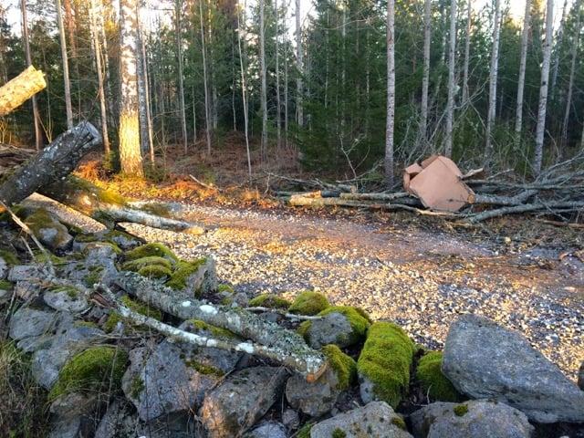 I fredags var vägen ut från gården blockerad av ett nedblåst träd. I dag skiner solen igen och jag ska ta hand om det som blir nästa års ved,