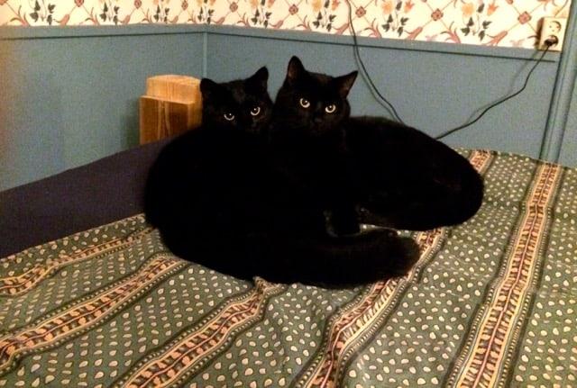 Marlon och von Dallas föredrar just nu att tillbringa dagarna inomhus. Katter är kloka. Själv försöker jag utnyttja dagsljuset för att få lite uträttat.