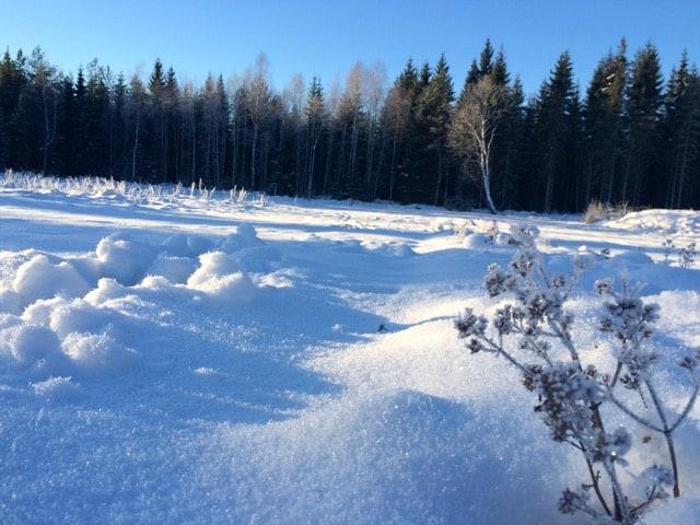 Under snön väntar jorden på mina pluggplantor. Det gäller att planera så de har rätt storlek när det är dags att plantera ut. Så som varje år är frågan – När är våren här?
