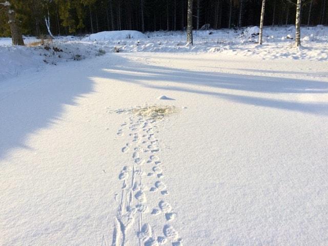 Jag promenerade utan större funderingar, ända tills jag gick igenom isen. Nu var det bara diket jag plurrade i, men det gav mig ändå en tankeställare.