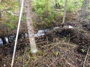 Att arbeta i skogen innebär inte bara motorsåg och röjsåg. När det känns som vår i luften passar jag på att rensa skogsdiken från nedfallna grenar.