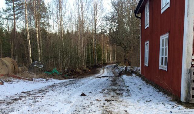 Till vänster på bilden kan man se hur skogen såg ut innan röjning och gallring. Svårframkomlig för alla djur större än ett vildsvin.