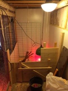 En hörna i hönshuset har fått isoleringen på plats. Väggen i mitten är löstagbar så att man har tillgång till hela utrymmet när det inte är kycklingar på gång.