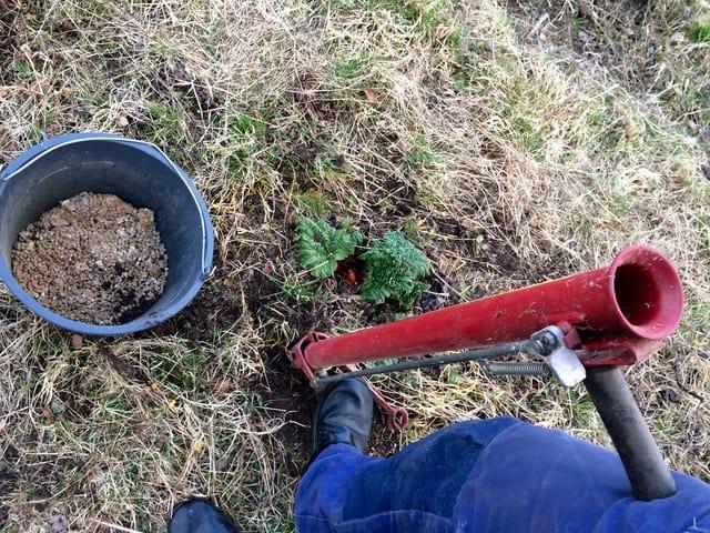 Ett skogsplanteringsrör är en bra hjälp när man ska gödsla rabarber i lite större skala.