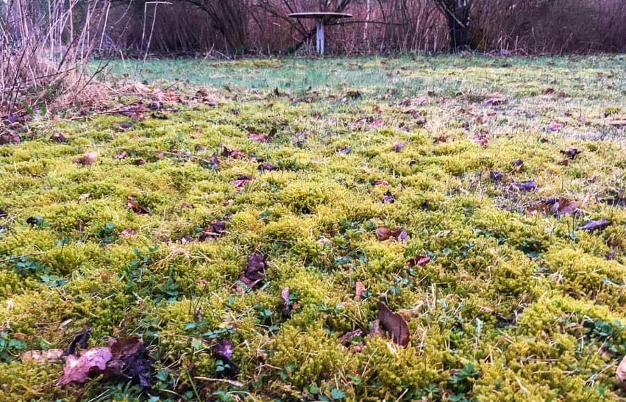 På våren är vi många som hittar partier med mossa i gräsmattan. Jag tar det med ro – jag har redan det bästa motmedlet: Gräs.