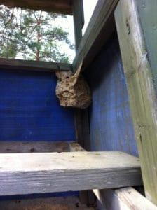 Ett stort getingbo är lite knepigare. Det här satt i ett jakttorn och jag fick två stick i örat när jag stack upp huvudet.