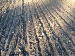 Efter varje harvning ser det likadant ut igen. Bor man på moränmark så finns det ett outsinligt förråd av sten under markytan.