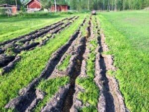 Jag drar upp tre fåror med potatiskupen och lägger hönsgödsel i mittfåran. Tidigt på våren brukar det räcka med att fräsa mitten – men när grässvålen blivit stabilare kör jag med en grunt ställd plog fram och tillbaka för att få loss gräset innan fräsning.