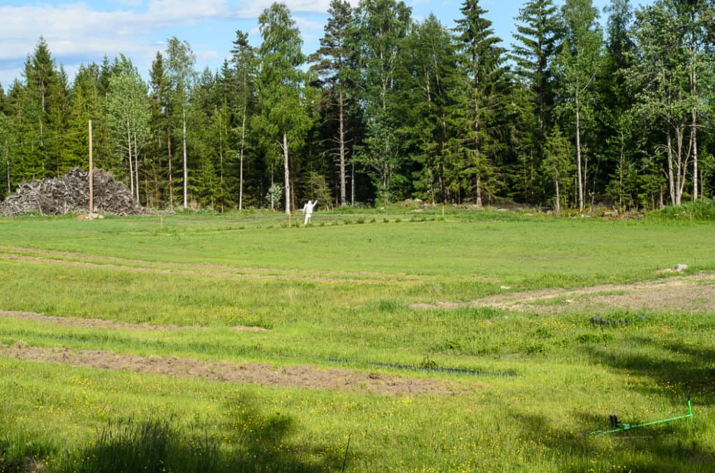 En bild över den framtida äppelodlingen, gräset kommer bra och snart kommer jag att göra punktinsatser mot överlevande skräppor och tistlar.