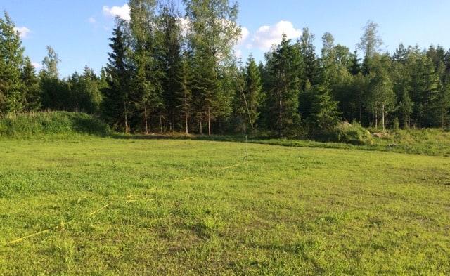 På lite håll ser det jämngrönt ut men det kommer att tar lite tid innan en gräsmatta är riktigt etablerad,