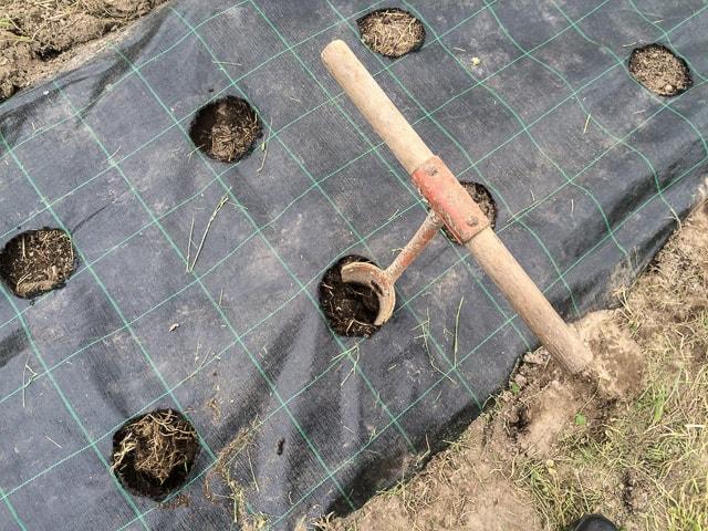 När hålen är klara luckrar jag jorden med det här redskapet som jag hittade i ladugården.