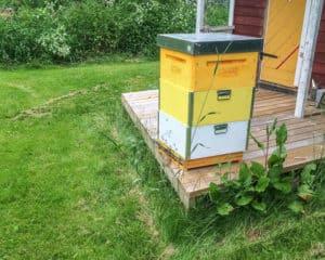 Jag öppnade flustret fullt och efter någon timme hade alla bina krupit in och börjat göra sig hemmastadda.