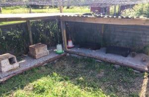 Jag byggde en skyddad hörna där mina vaktlar har mat, vatten och några små hus.