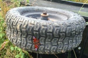 En vuxen påfågelsöga på mitt punkterade vagnshjul.