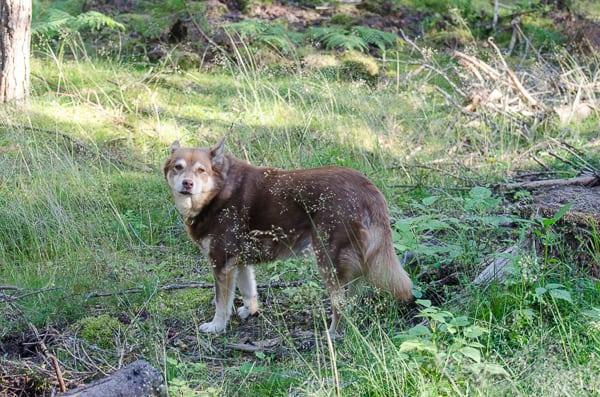 Mest uppskattar hon när vi lämnar vägen och ger oss ut i skogen.