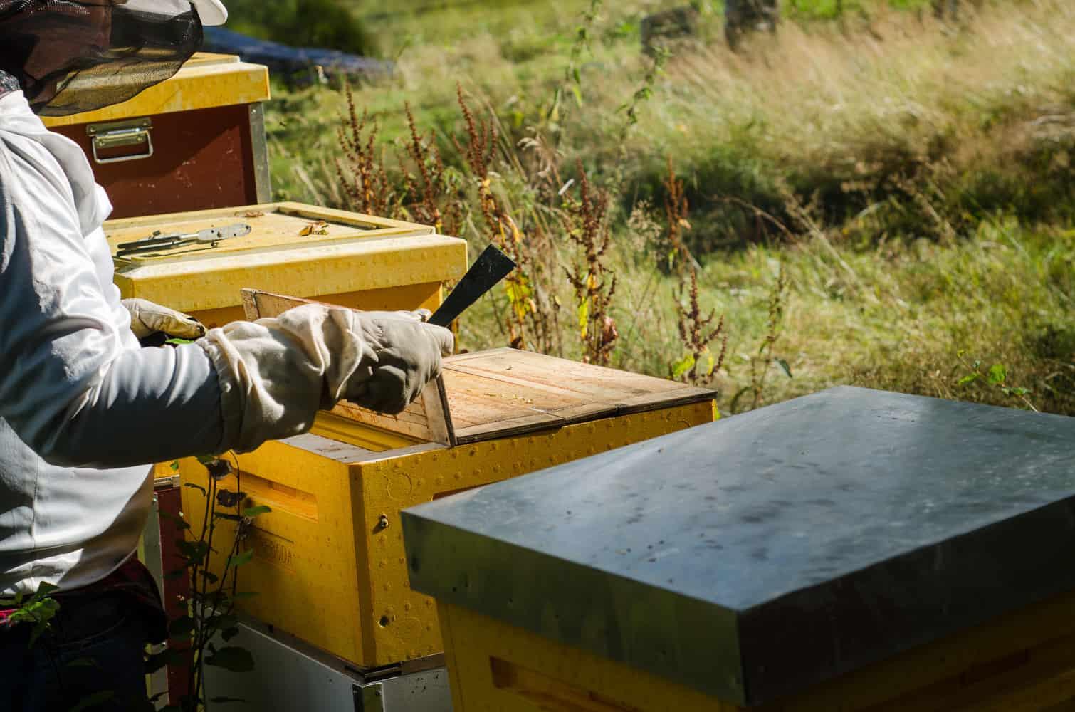 Under kupornas yttertak ligger täckbrädor som skyddar ramarna med honung och bin. Bina tillverkar propolis som fungerar som klister för att täta alla glipor. Därför behöver man ett bräckjärn för att få loss brädorna.