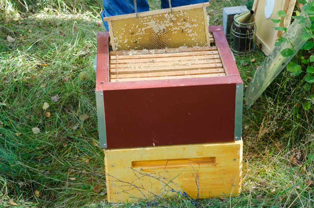 Så här ser en lätt ram ut. Bara ett fåtal av cellerna är täckta och det är glest med bin.