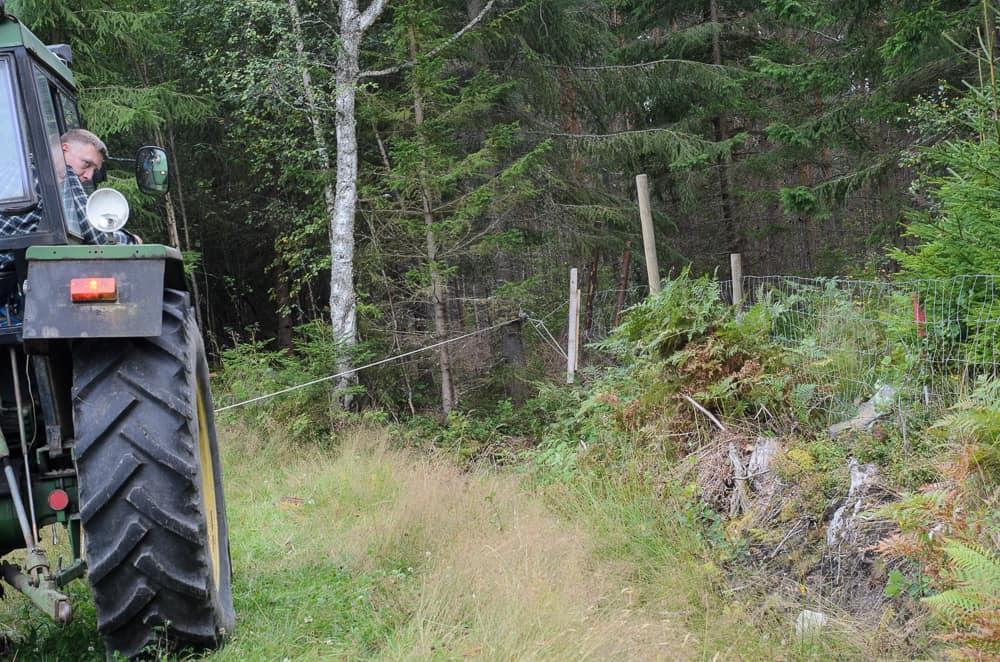 Man får vara väldigt försiktig när man sträcker stängsel med traktorn. Det är lätt att förivra sig – och då slutar det med en smäll och en rulle skadat stängsel.