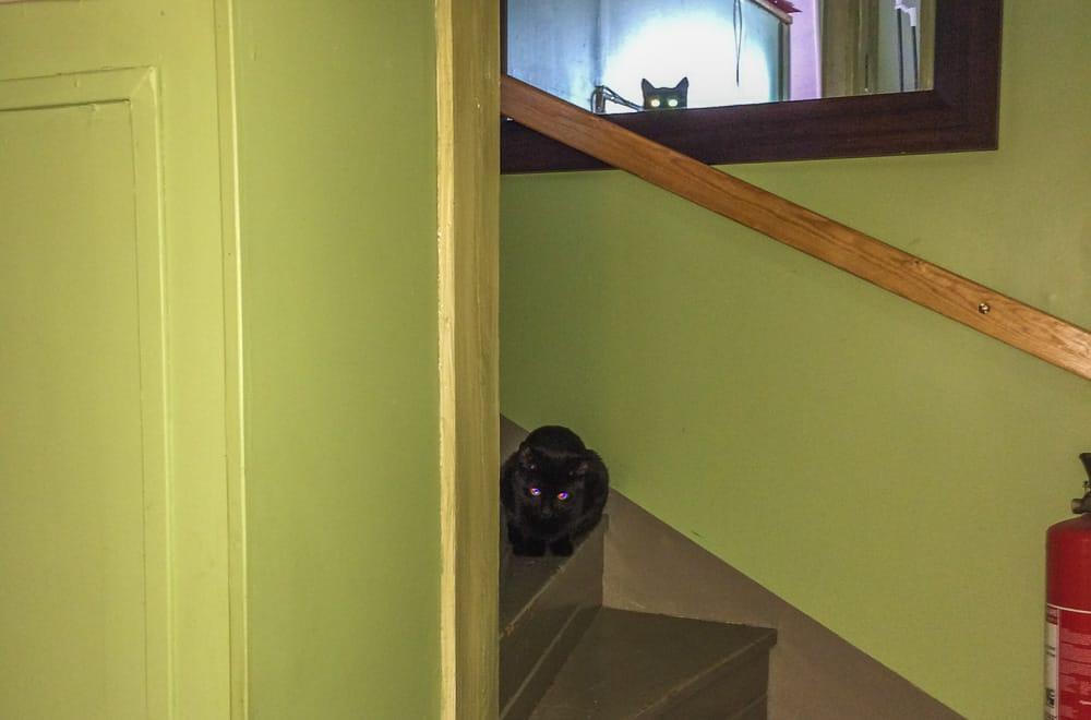 När de först flyttade in hos mig var de lite försiktiga – men samtidigt väldigt nyfikna på vad som hände. Och visst kan katter använda speglar för att hålla koll.