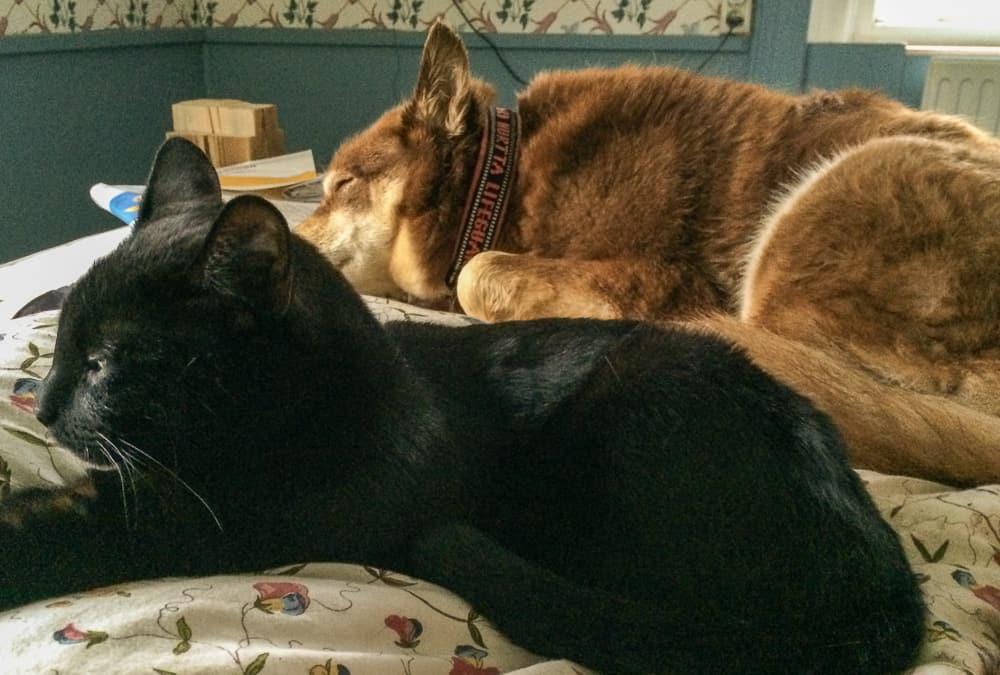 Lata dagar vintertid brukar både hund och katt föredra att ligga inne.