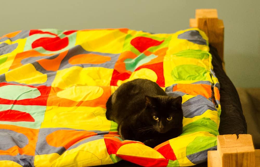 Dallas kan konsten att slappna av. Men han är alltid i tjänst. Som yrkesarbetande katt tvekar han aldrig att ingripa.