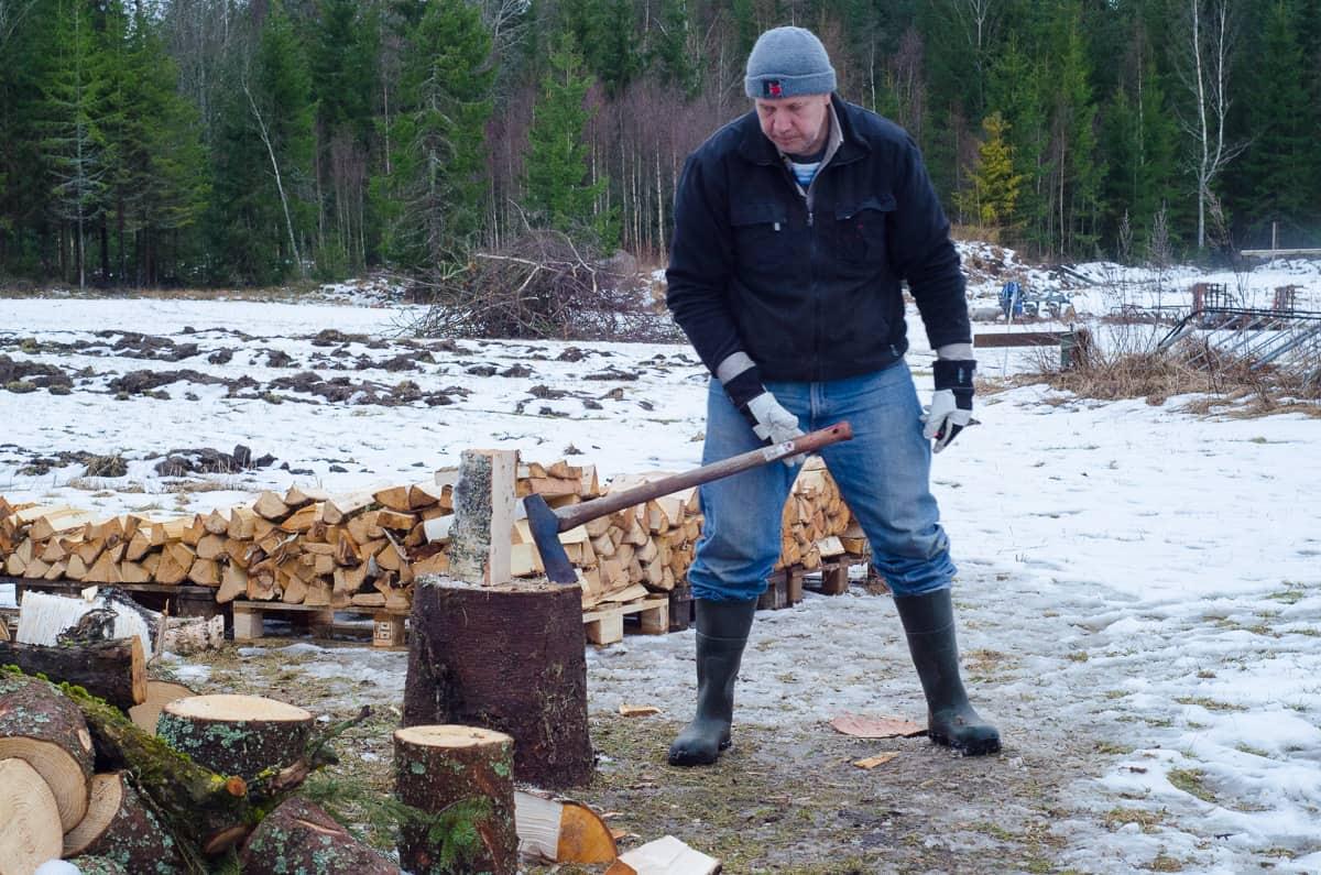 Även rätt grova björkbitar går att klyva för hand om man gör det tidigt på året – och särskilt om man använder en bra yxa och rätt teknik.