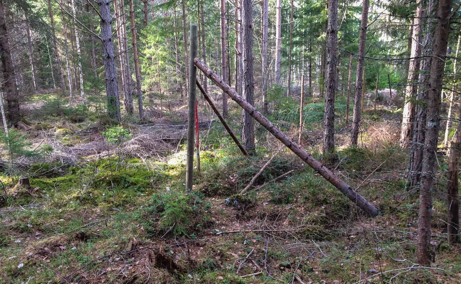 Hörnstolpen hade lyft upp ur marken och hängde på de två strävorna. Jag som tyckte den var rejält förankrad.