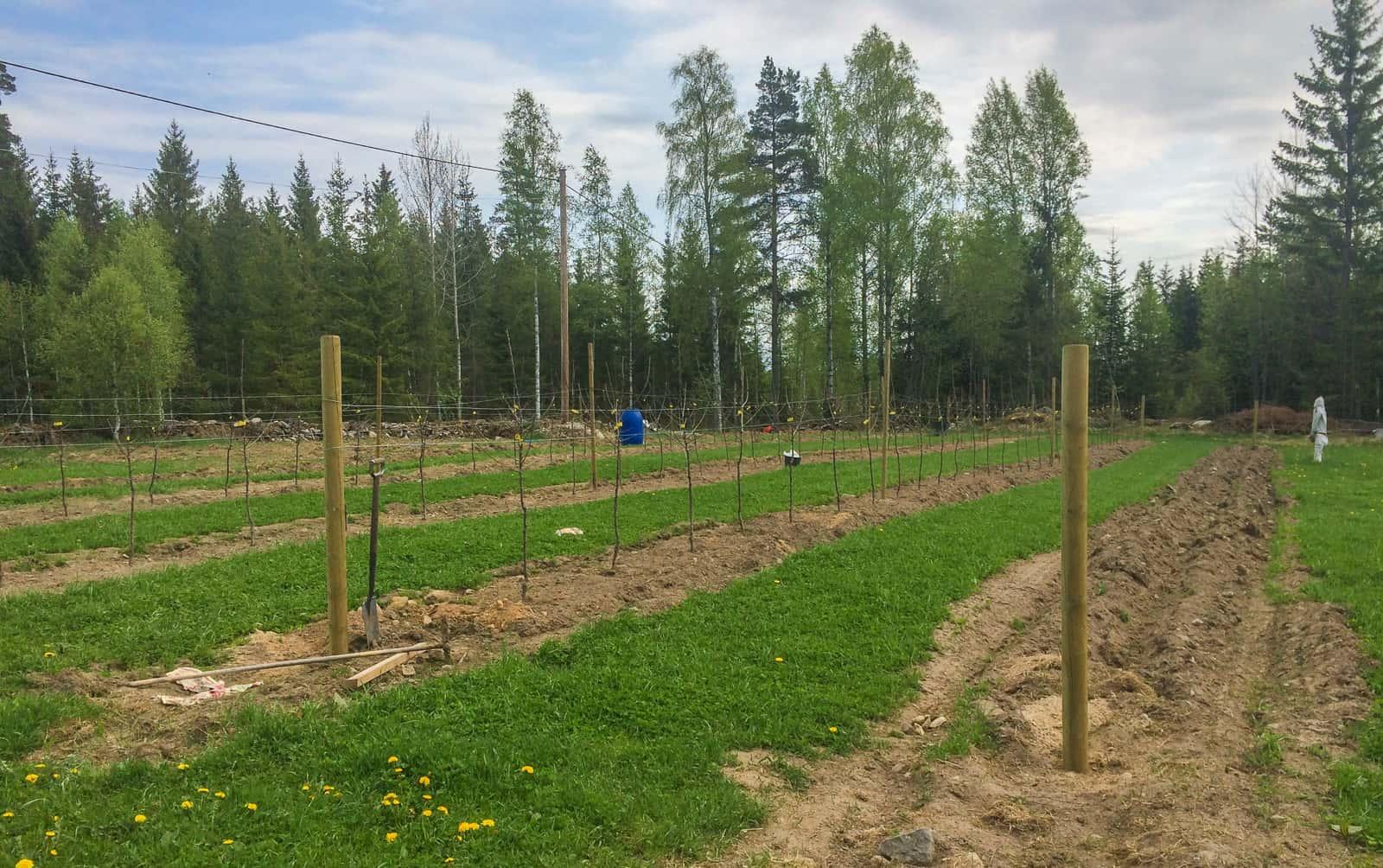 I min äppelodling på 2500 kvadratmeter har jag tjugofem stolpar av tryckimpregnerat virke. De man läcka max 180 gram koppar under 40 år och är därför inte tillåtna i ekologisk odling. Samtidigt är det tillåtet för mig att gödsla med 1,5 kilo koppar var femte år i samma odling – helt ekologiskt.