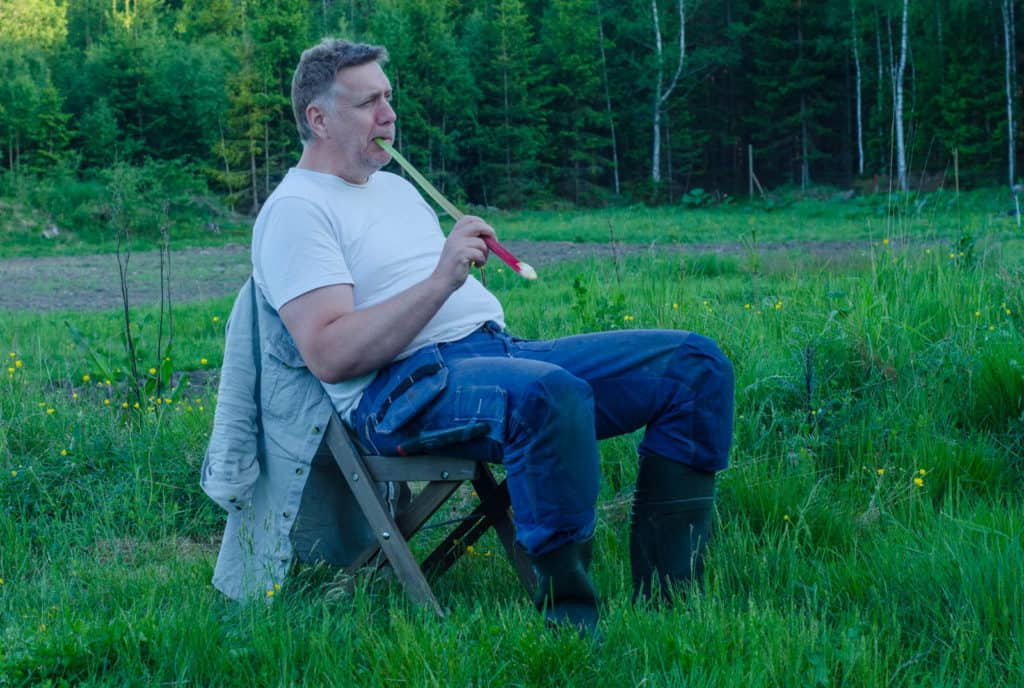 Färska rabarber är perfekta att tugga på när man njuter av sommarkvällen efter en dags arbete i fält. Men att frysa rabarber är bästa sättet för praktiskt taget all annan användning.