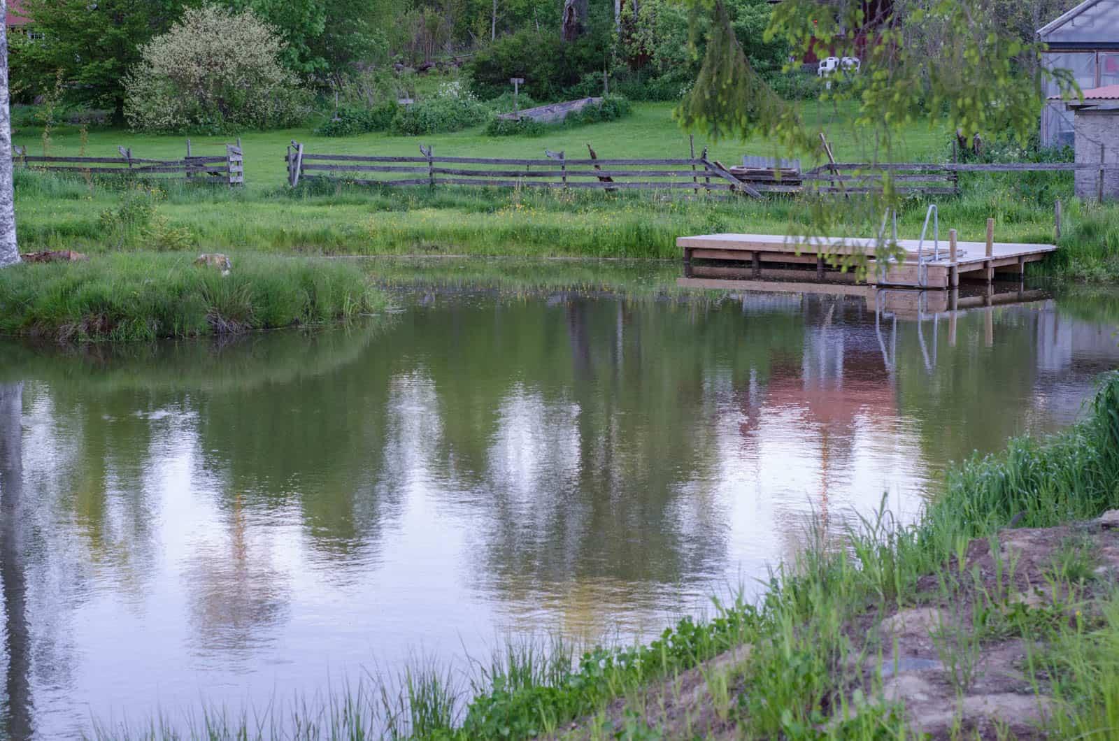 Min kräftodling. Dammen grävdes 2013 och två år senare planterade jag tvåhundra flodkräftor. Det hade inte hänt om jag trott på WWF:s rekommendationer.