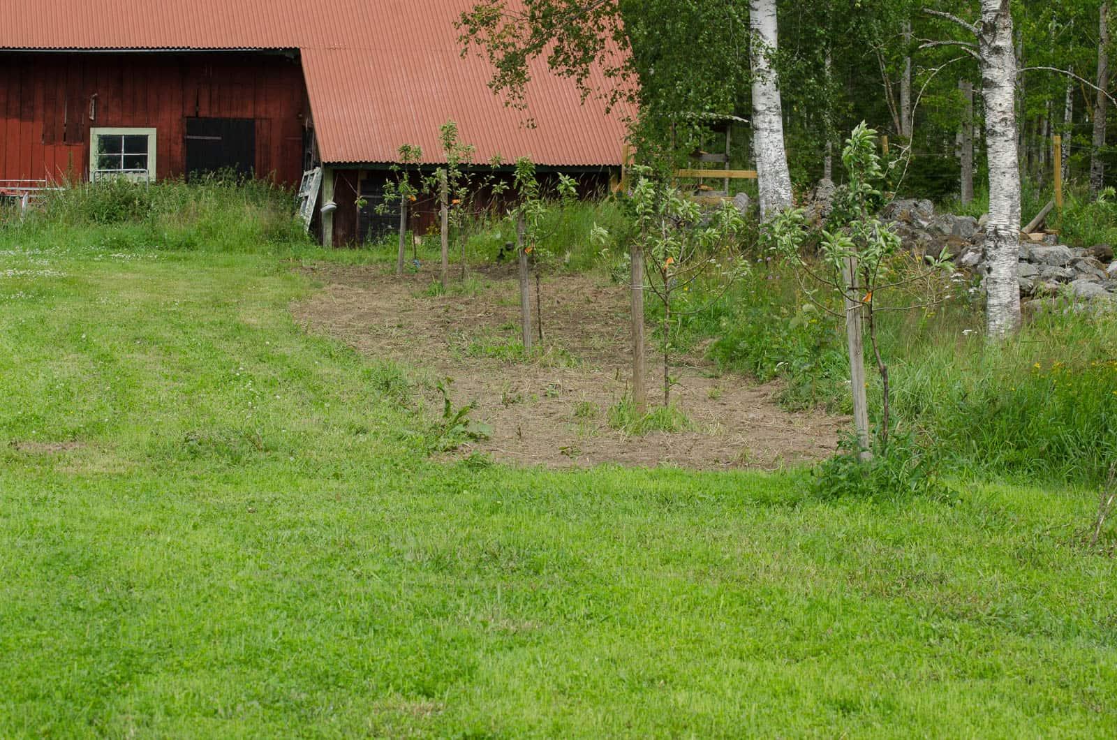 Här bestämde jag mig för att så gräs för ett par dagar sedan och räknar med att det som ut som gräset närmast i bild om några veckor.