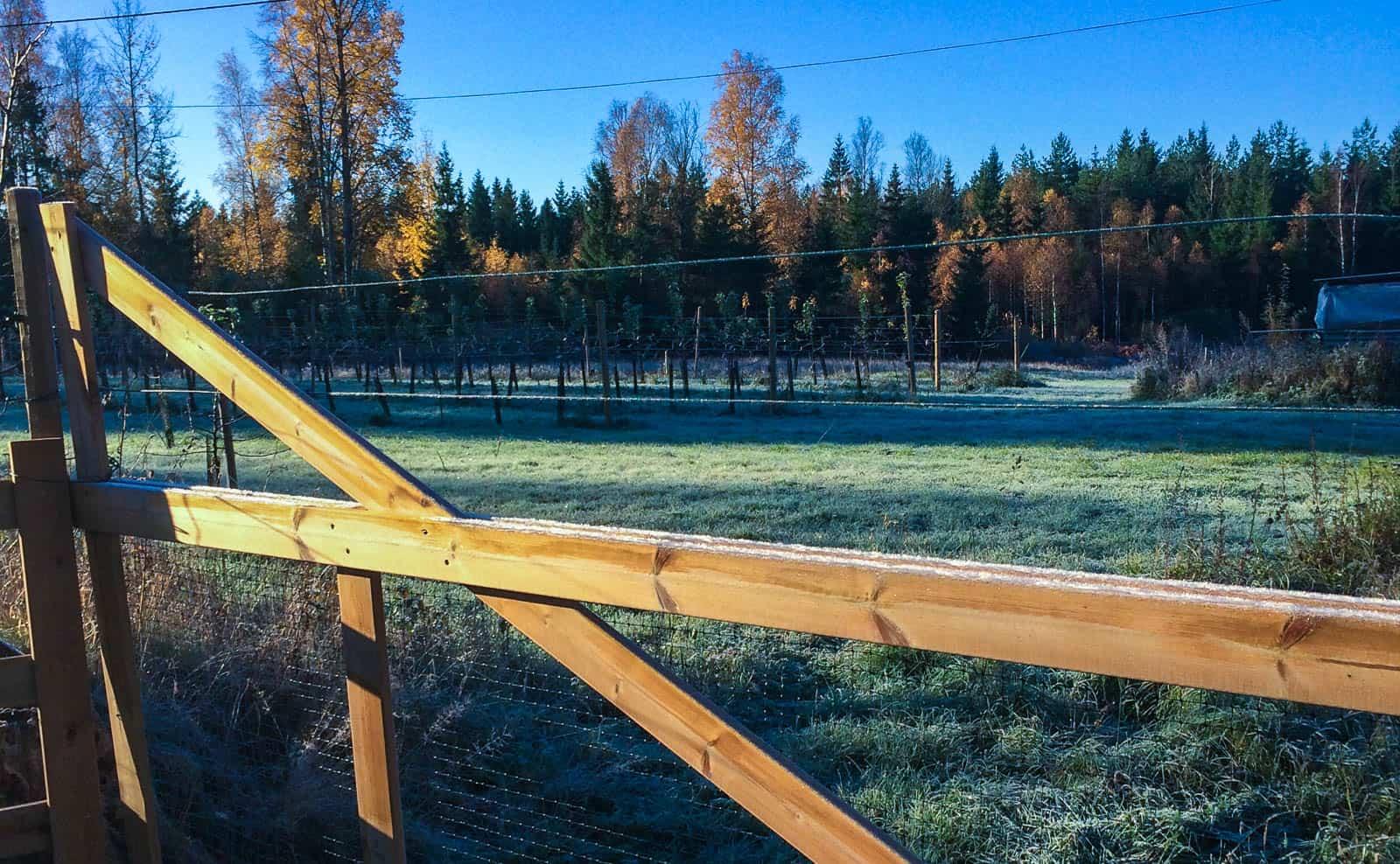 En stjärnklar himmel bjöd på höstens första frostnatt och på morgonen var det vindstilla och klarblå himmel.