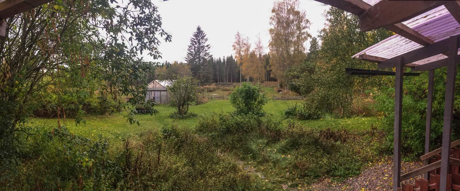 En kort tid kvar innan björklöven lämnat träden för i år.
