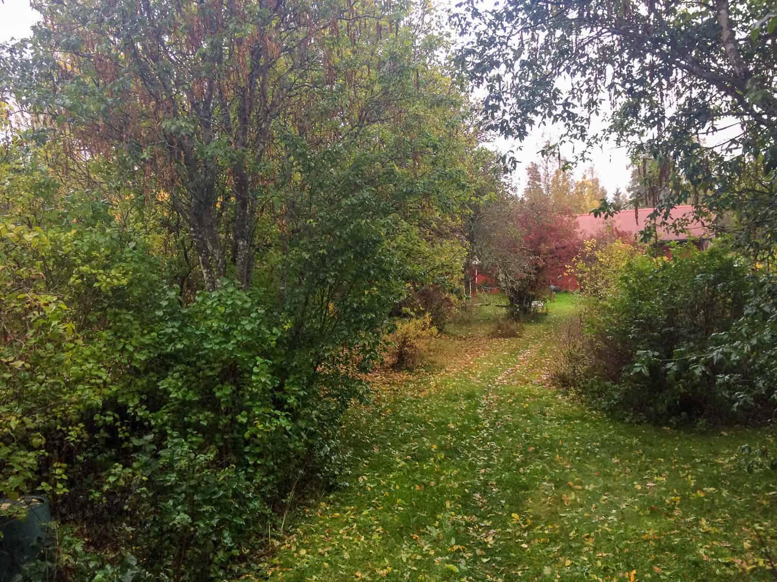 Snart ligger det en jämn matta av löv hela vägen ner till ladugården och det blir dags att plocka fram snöslungan.