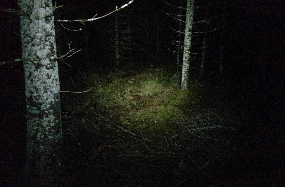 Går man genom skogen på natten är det bra med en pannlampa. Jag har testat både dyra och billiga och de dyra har bättre ljus – men sämre livslängd.