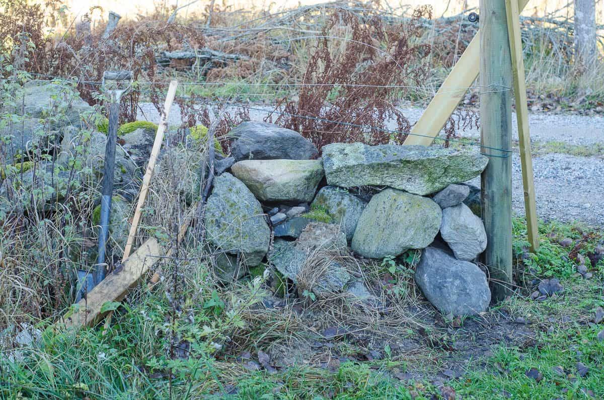 I augusti grävde jag stolphål vid en av stenmurarna. Jag blev inte riktigt klar – och spaden står fortfarande och väntar på att jag ska avsluta projektet.