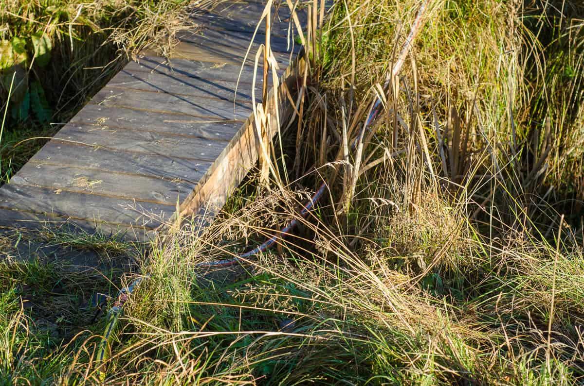 Under sommarens torka drog jag slang ner till dammen. Och eftersom jag fyllde på flera gånger lät jag den ligga kvar. Där ligger den fortfarande.