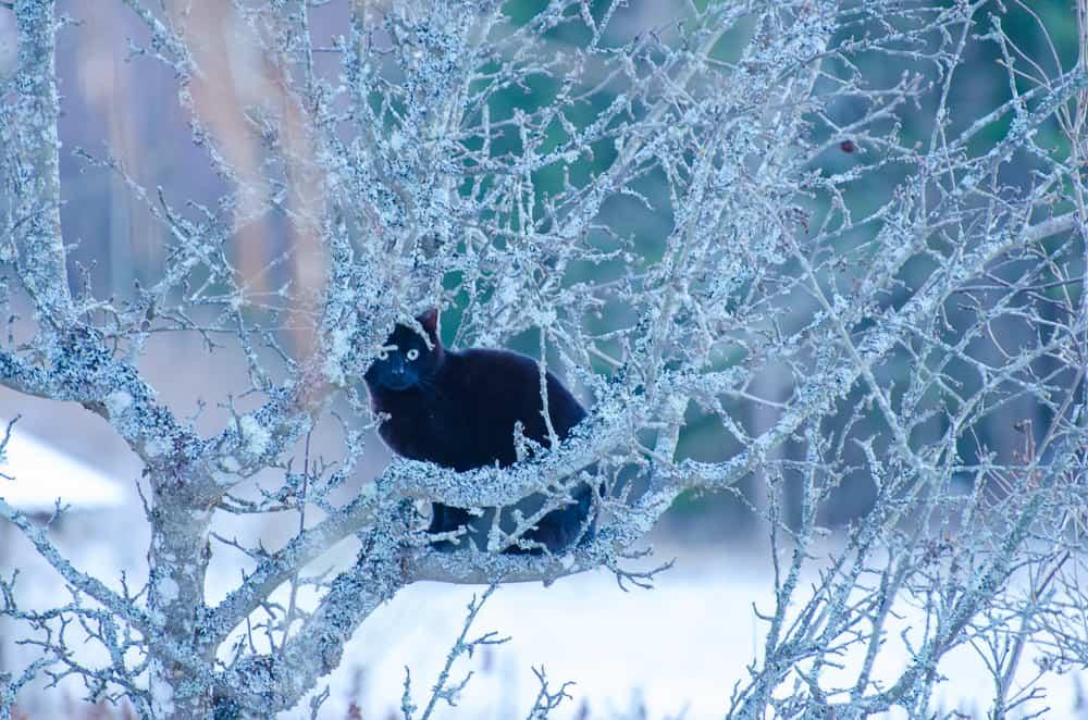 Nyfikenhet är något som präglar båda mina katter – finns det ett hål ska man krypa in, finns det ett träd ska man klättra upp.