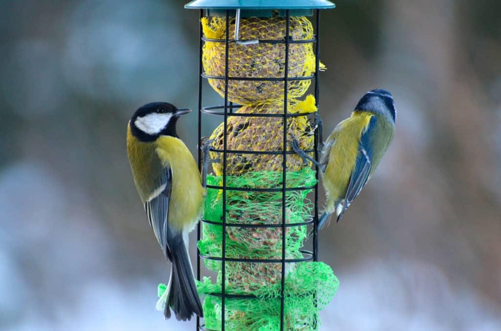 Toppstriden här brukar stå mellan talgoxe och blåmes – om inte stjärtmesarna beslutar sig för att titta förbi när det är fågelräkning.