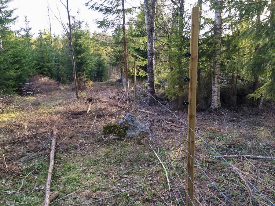 Genom skogen har jag satt stolparna med åtta meters avstånd. Fårstängsel i botten och tre eltrådar ovanför.